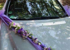 cvjecarnica palma automobili 06