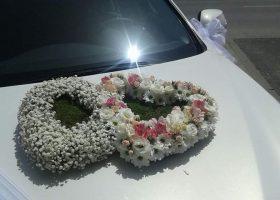 cvjecarnica palma automobili 08