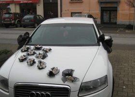 cvjecarnica palma automobili 09